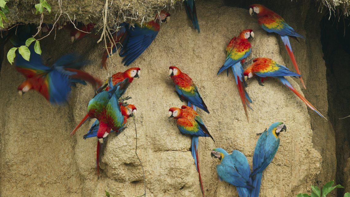 "SUDAMÉRICA: ""SIETE MUNDOS, UN PLANETA"""